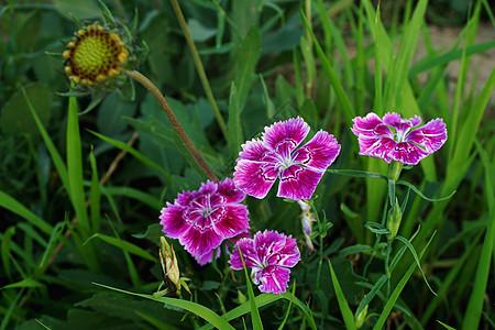 野花 菊花 花卉 唯美 花 植物 自然 风景高清图片