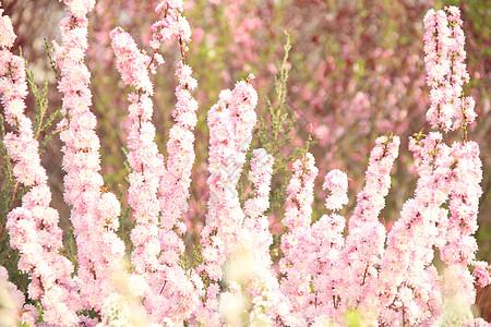 春天 花草 自然 旅游 花卉 梨花 木兰 桃花图片