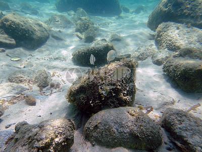 海底的礁石高清图片