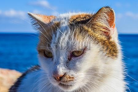 海边的宠物猫高清图片
