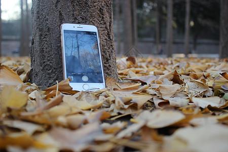 手机银杏叶图片