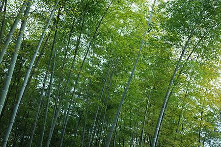 成片的竹海图片