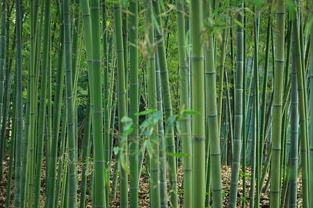 草木绿春天植物花草树木竹林图片