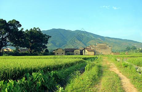 乡村绿色图片