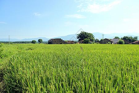 绿油油的田野图片