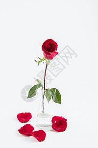 爱情玫瑰花图片
