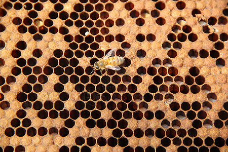 蜜蜂的蜂巢图片