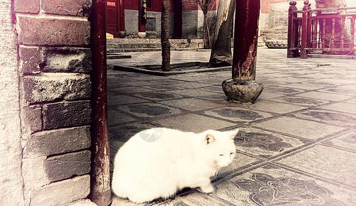 寺庙里的小猫图片