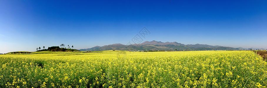 春天油菜花图片