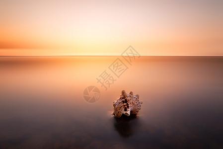 彩霞中的海螺图片