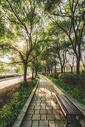 树林间的道路图片