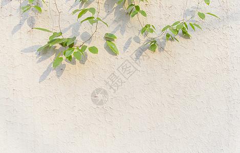 清新文艺阳光绿植墙面图片