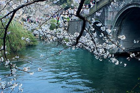 西湖太子湾公园樱花图片