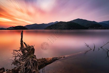 彩霞中湖边的树根图片