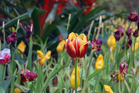 春季的花图片
