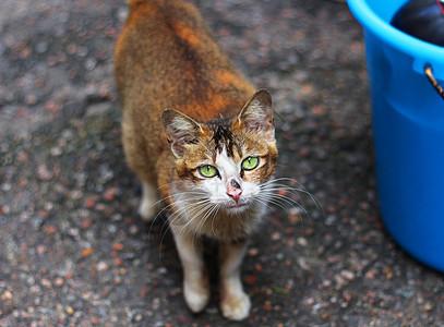 动物 猫  图片