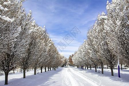 石河子大学雪后风光图片