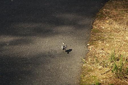 杭州路边的小鸟图片