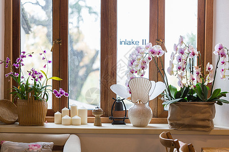 室内花卉图片