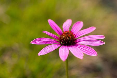 植物园花卉图片