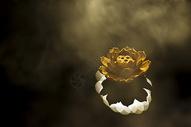 禅意的莲花图片
