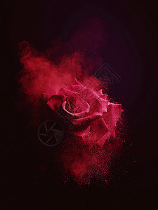 黑色背景下飘散的红玫瑰图片