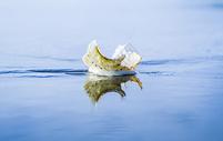 滨海螺影图片