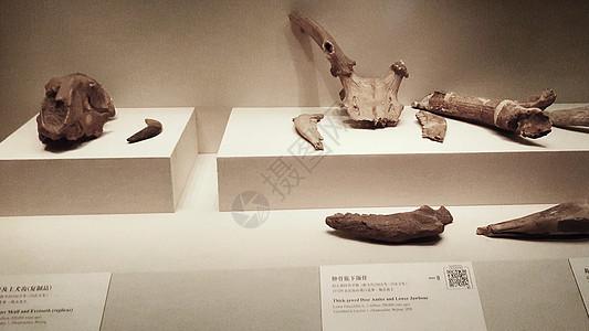 考古文物图片