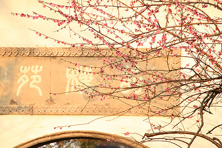 梅花落斜阳图片
