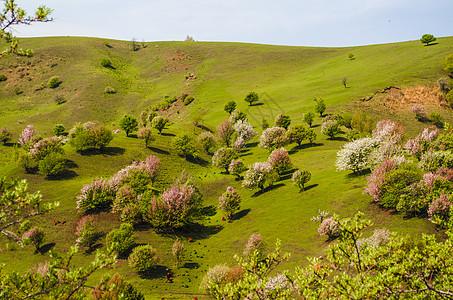 春天里漫山盛开的桃花图片