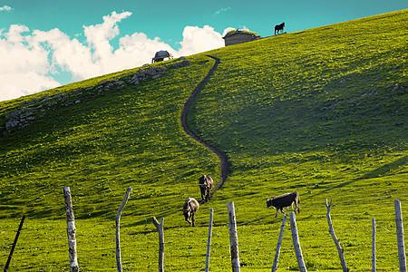 喀拉峻大草原图片