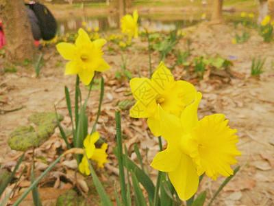 阳春三月图片