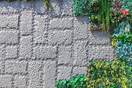 砖墙上的植物图片