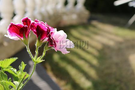 清新唯美花朵图片