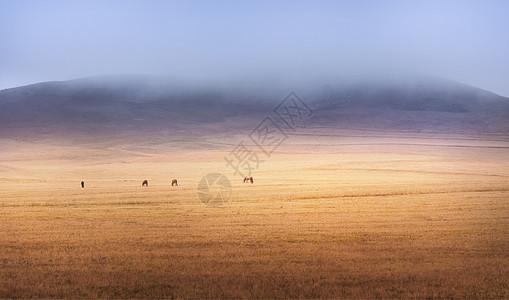 美丽的乌兰布统草原图片