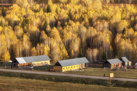 金色世界的禾木图片