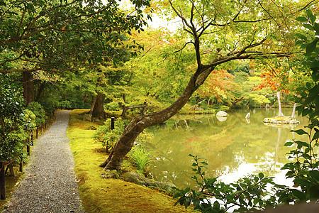 树林小道图片