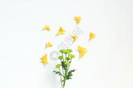 花朵上的纸蝴蝶图片