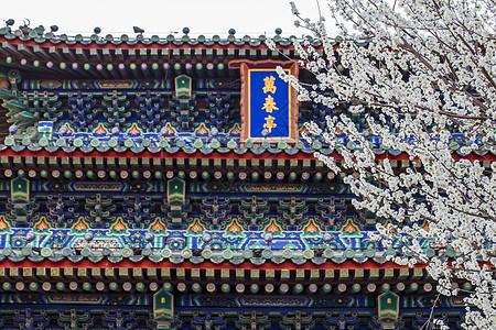 樱花.故宫图片