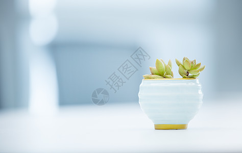 小清新盆栽图片