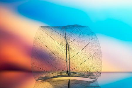 梦幻背景下的叶脉图片