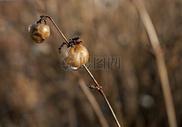 秋天枯枝图片