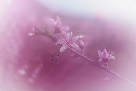 春天桃花十里桃花粉色诗意美景图片