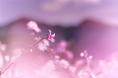 春天桃花桃林盛开朦胧聚焦之美图片