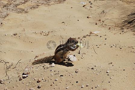 沙滩上的地鼠图片