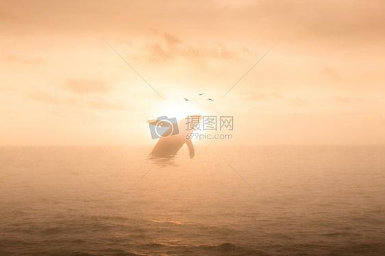 鲸鱼出海图片