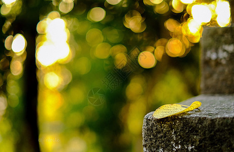 黄昏美丽的光斑图片