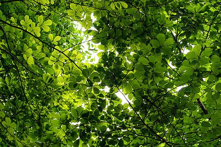 树叶 春天图片