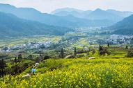 江西婺源漫山遍野的油菜花图片