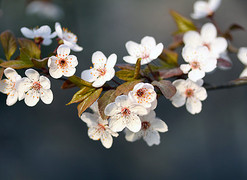 春天免费高清大图素材图片